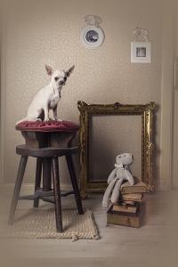 foto perro pequeño mascota