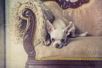 leo foto estudio mascota puerto real Olivier estudio