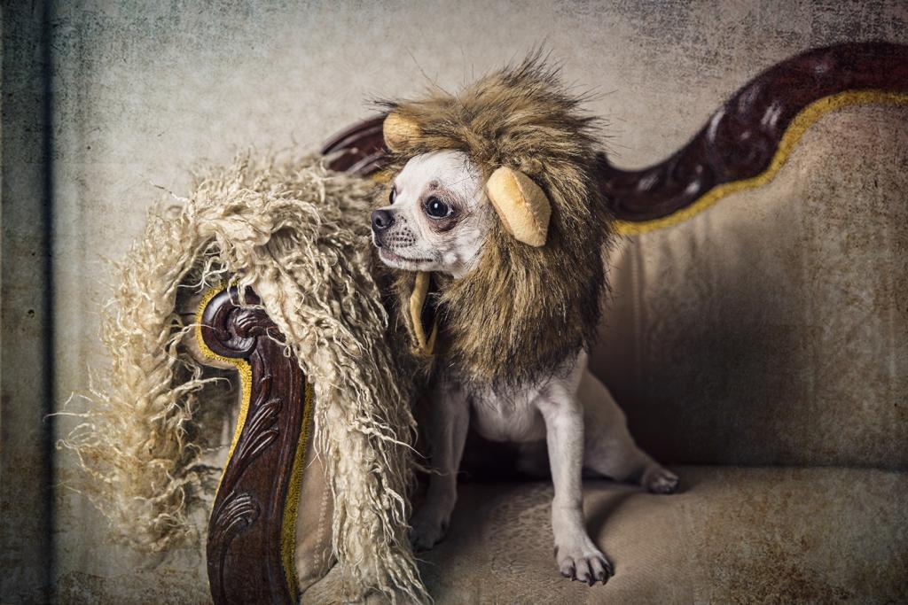 fotografía mascota Cadiz