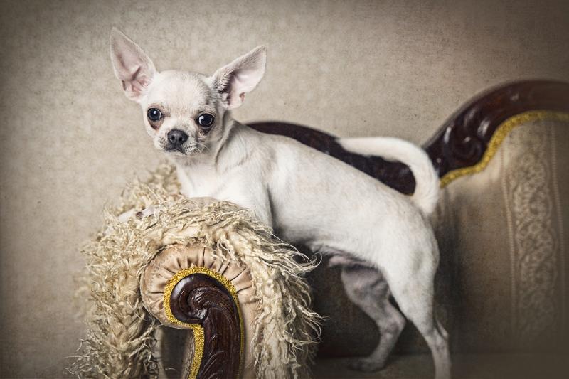 foto mascota perro dog fotografía